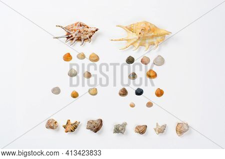 Lots Of Seashells On A White Background. Seashells Are Laid Out In The Form Of A Composition Similar