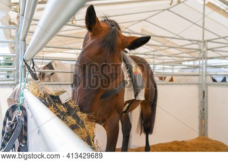 Brown Horse In Stall With Head Down Feeding On Hay