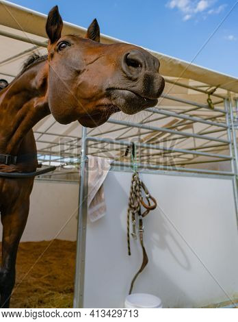 Brown Horse Poking It's Head Out Of Stall Looking Curious As If Investigating Whats Happening.