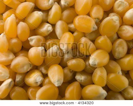 Popping Corn Maize Kernels
