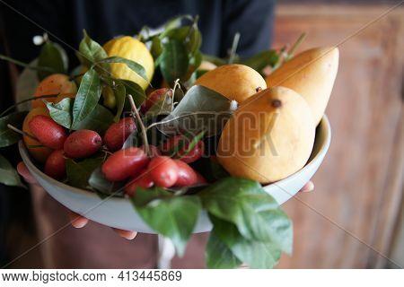 Hand Holding Dish With Mango Lemon, Indian Ivy-rue Zanthoxylum Limonella Alston