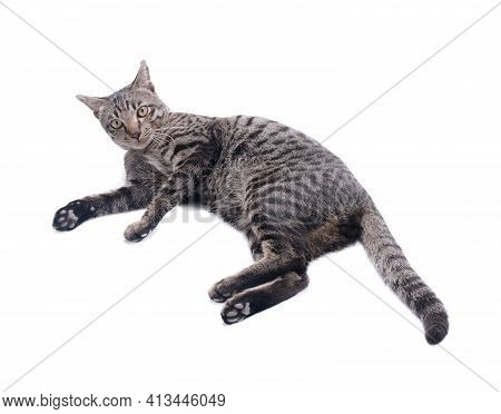 Happy Tabby Cat Isolated On White Background