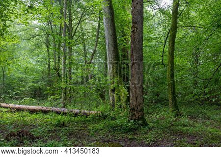 Natural Deciduous Tree Stand