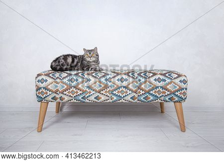 Funny Whisker Cat Resting On A Couch At Home.