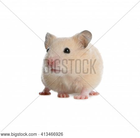Adorable Syrian Hamster On White Background. Small Pet