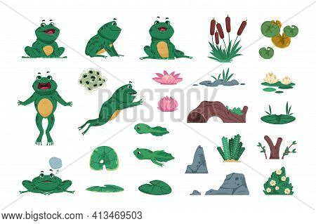 Frog. Cartoon Amphibian With Pond And River Plants. Growth Steps Of Life Cycle. Isolated Wild Animal