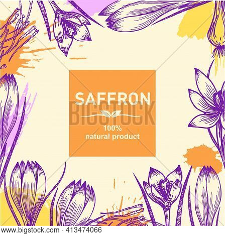 Background With Saffron Flower And Saffron Stamens. Sketch. Spring Flowers. Cosmetic, Perfumery And