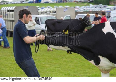 East Kilbride, South Lanarkshire, Scotland, Uk - June 14, 2014: A Farmer Trying To Get A Cow To Move