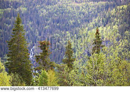 Spring Forest And High Rocks Near Rjukan, Hardangervidda, Norway