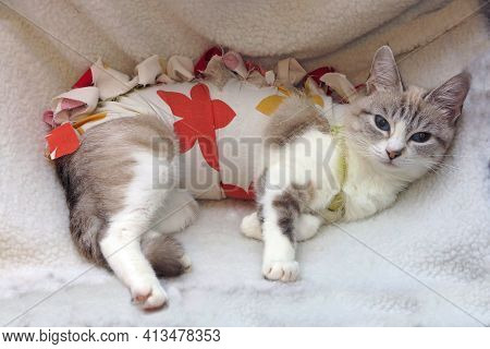 Cute Funny Cat Bandaged After Surgery, Waiting To Recover On White Pillow