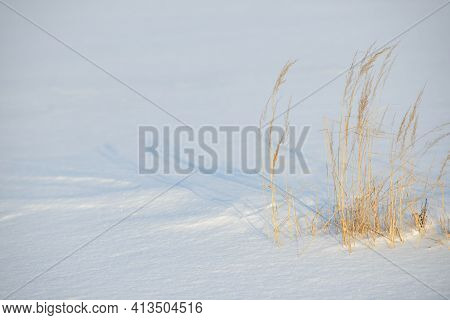 Dry Branches Of Grass And Flowers On A Winter Snowy Field. Seasonal Cold Nature Background. Winter L