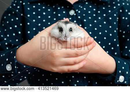 The Kid Holds A Grey Hamster Pet In His Hands. Hamster Look At Camera. Hands Of A Child With A Cute