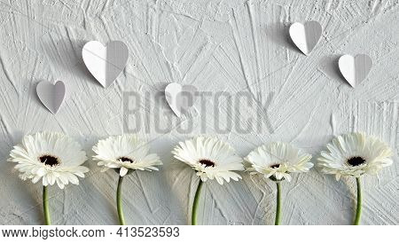 White Gerberas On Off White Textured Background. Off White Gerbera Daisy Natural Fresh Flowers In A
