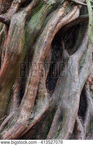 Nature Abstract From Tree Bark The Wood Is Twisted Into Abstract Shapes