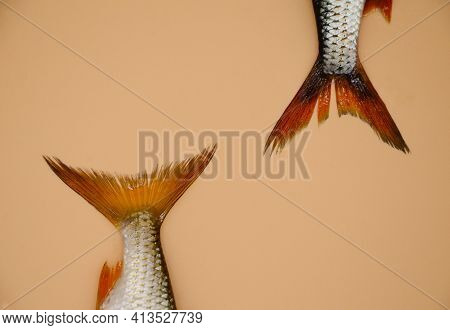 Two Tails Of River Roach Fish On Orange Background. Concept Of Kitchen, Food Preparation, Shop Windo