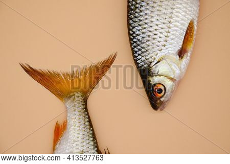 The Head And Tail Of River Roach Fish On Orange Background. Concept Of Kitchen, Food Preparation, Sh