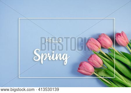 Pink Tulips Flowers On Blue Background. Hello Spring And Easter Concept With Beautiful Fresh Tulips.