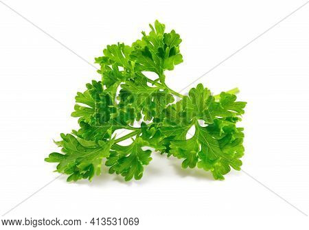 Fresh Green Parsley Leaves Isolated On White Background. Fresh Green Plant, Nutritious, Tasty Green