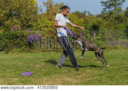 The Man Training American Staffordshire Terrier Outdoors .