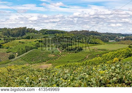 Vineyards And Farm Fields