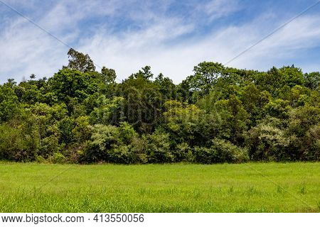 Forest And Farm Field, Pinto Bandeira, Rio Grande Do Sul, Brazil