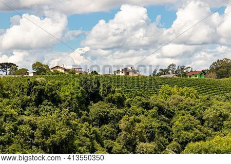 Vineyards, House And Forest In Valley  , Bento Goncalves, Rio Grande Do Sul, Brazil