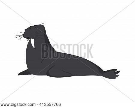 North Pole Arctic Fauna. Polar Walrus Or Seal Vector Illustration In Flat Style. Arctic Animal Icon.