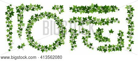 Green Climbing Ivy Creeper Branches Isolated On White Background. Hedera Vine Frames And Borders, Bo