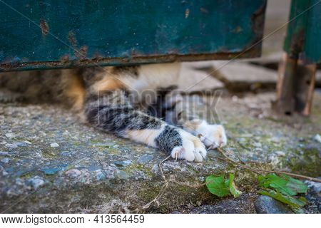 Curious Calico Kitten Trying To Get Out Under The Gate, Only Paws Visible