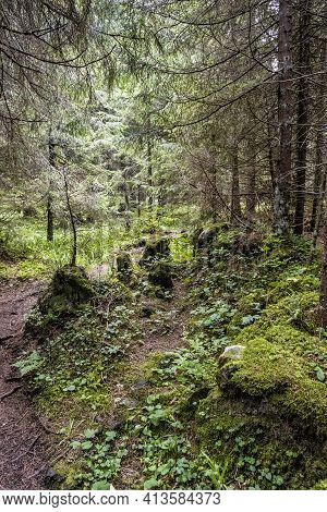 Foopath In Coniferous Forest, Low Tatras Mountains, Slovak Republic. Hiking Theme. Seasonal Natural