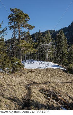 Coniferous Forest, Poludnica, Low Tatras Mountains, Slovak Republic. Hiking Theme. Seasonal Natural