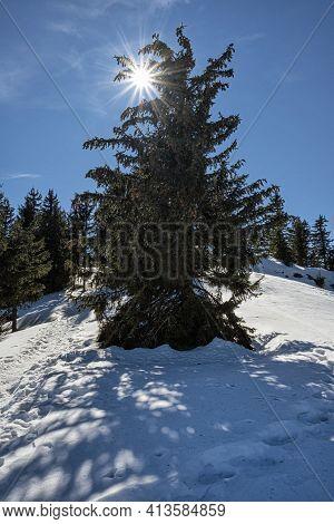 Coniferous Tree With Sun, Poludnica Hill, Low Tatras Mountains, Slovak Republic. Hiking Theme. Seaso