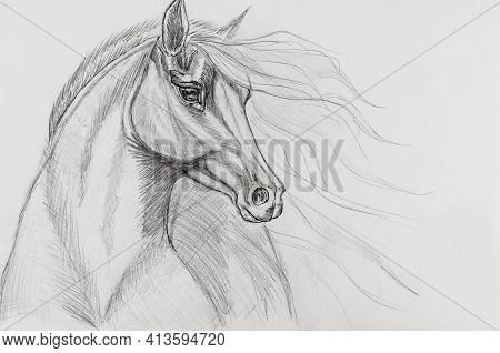 Pencil Drawing Of A Horse On White Paper. Portrait Of An Animal With A Long Developing Mane. Hand-dr