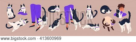 Cats Body Language. Feline Behavior And Feelings. Cute Pets With Angry, Friendly, Calm, Playful And