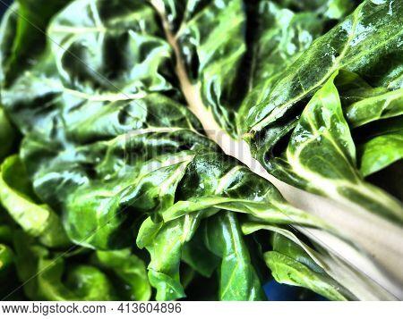 Mangold Beta Vulgaris. Biennial Herb, A Subspecies Of Common Beet. Fortified Green Lettuce Leaves. V