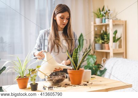 Woman Gardeners Watering Plant In Ceramic Pots On The Wooden Table. Home Gardening, Love Of Housepla