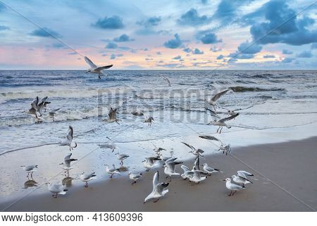 A lot of seagulls on a beach at sunset