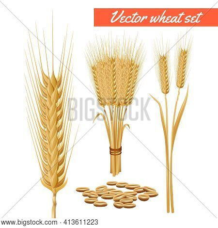 Ripe Wheat Plant Harvested Heads And Grain Decorative And Health Benefits Advertizing Poster Backgro