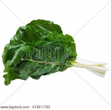 Mangold Beta Vulgaris. Biennial Herb, A Subspecies Of Common Beet. Vegetarian Or Healthy Food. Washe