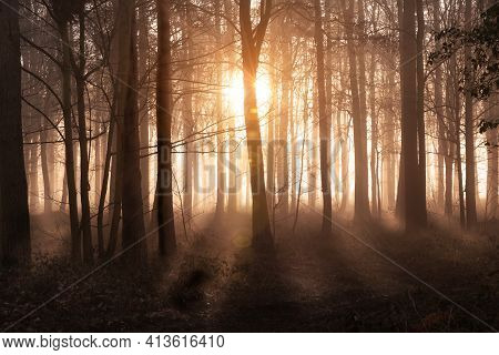 Stunning Forest In Dawn Sunrise And Mist. Orange Glowing Sun And Rays With Tree Shadows. Norfolk Eng