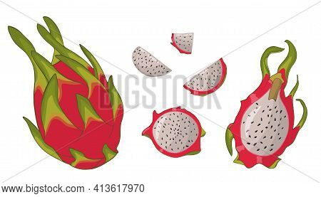 Pitaya Isolated On White, In Different Types Whole, Peeled, Cut, Flesh. Vector Hand- Drawn Illustrat