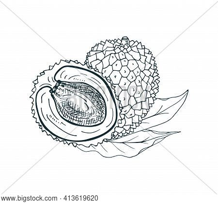 Lychee Fruit Whole And Half With Leaves. Vector Hand-drawn Illustration.