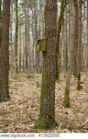 Old Birdhouse Nesting Box Hanging In Forest