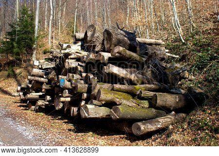 Staple Of Cut Trees In A Forest In Vaduz In Liechtenstein 17.2.2021