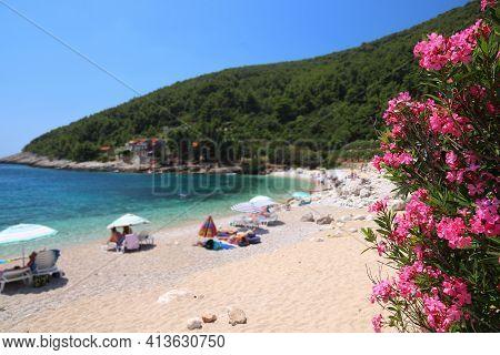 Croatia Beach - Korcula Island. Oleander Flowers In Pupnatska Luka Sandy Beach, Croatia.