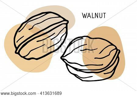 Walnut Set. Hand Drawn Vector Nut And Walnut Text. Doodle Sketch With Colored Spots. Organic, Fresh