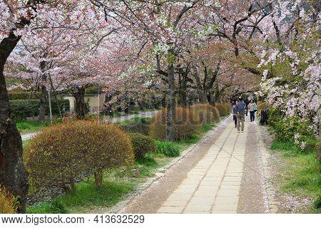 Kyoto, Japan - April 16, 2012: People Visit Philosopher's Walk (or Philosopher's Path) In Kyoto, Jap