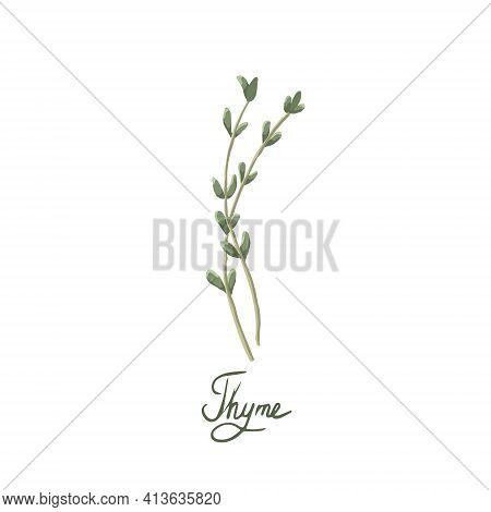 Thyme On A White Background Is Isolated. Thyme Spice Can Be Used For Kitchen Decoration, Food Packag