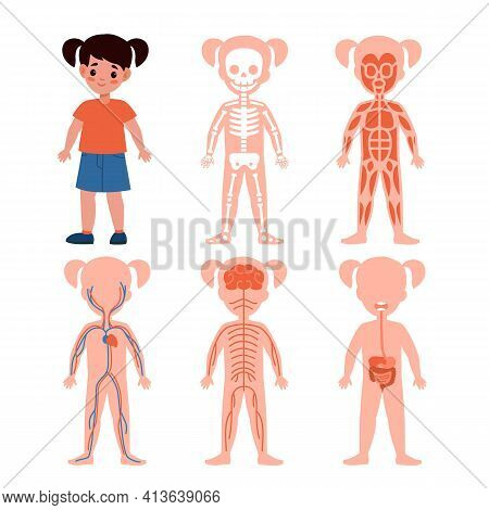 Girl Body System. Kids Silhouettes With Vital Systems Inside, Bones And Blood, Muscles, Nerves And I