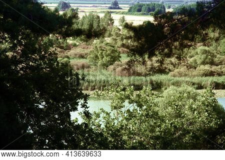 Wild Greenish Lake Surrounded By Reeds, Visible Through Thick Branches. Picturesque Fields And Brown